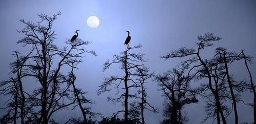 月亮鹅.jpg