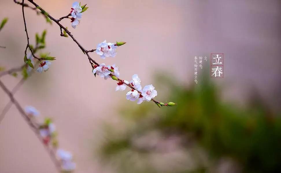 立春.jpg